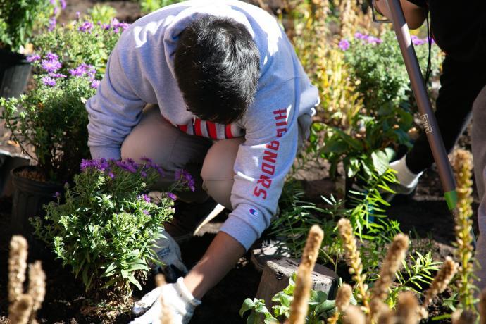 A Dorman Scholar plants a New England aster.