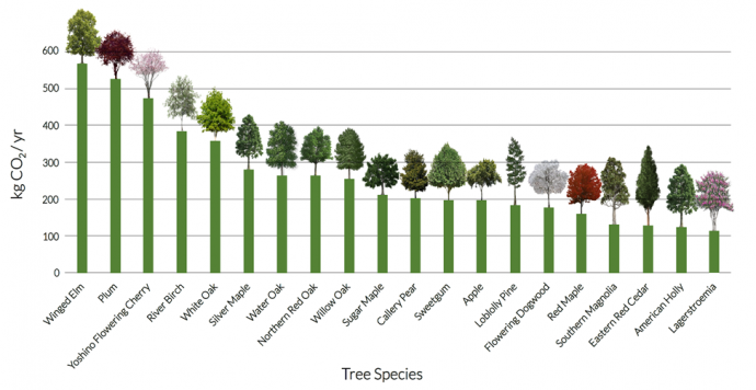 Carbon Dioxide Sequestered in Trees Local to Baltimore, MD Per Year. From documentation by Aziz, Cheikhali and Kadam.