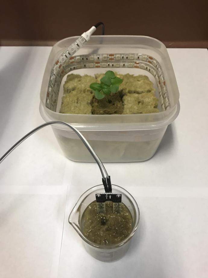 A plant grows inside of a container lined with LED strip lights, while a manufactured sensor measures the moisture levels of the soil inside of a beaker.