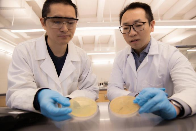 NJIT researchers Mengyan Li (right) and Daiyong Deng (left) analyzed the bacterium Mycobacterium dioxanotrophicus PH-06 to discover a critical enzyme that begins the breakdown process of 1,4-dioxane.