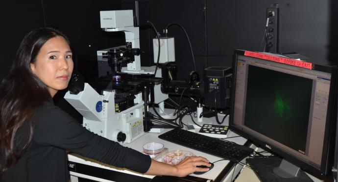 Alice Lee looking at cardiac cells.
