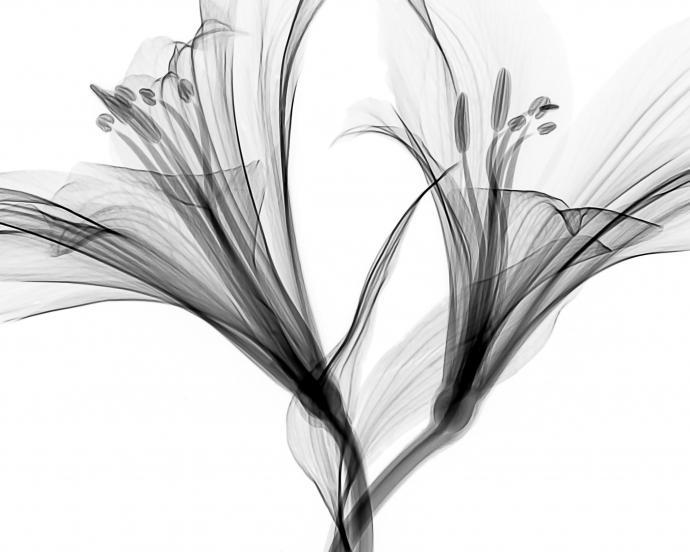 Mathew Schwartz CT Scan Image Flower Blooms